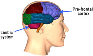 The Limbic region and Pre-frontal Cortex.